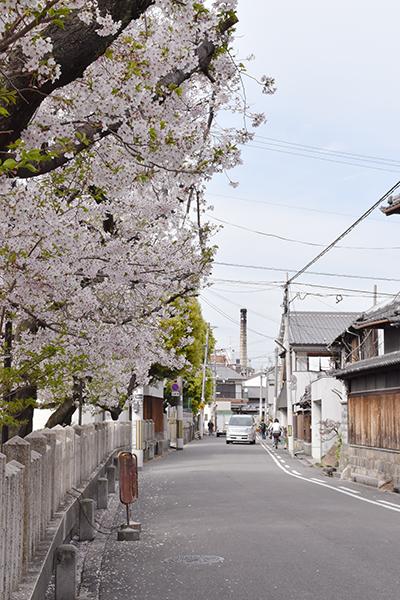 senbayasi_sakura_02