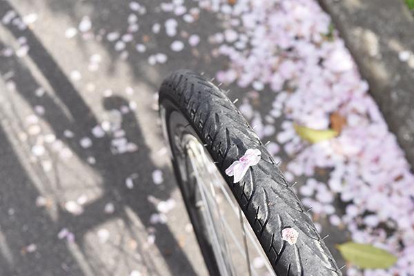 senbayasi_sakura_07